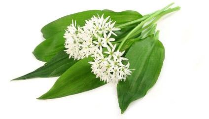 bio et belle la sant et la beaut par les plantes m dicinales et produits naturels. Black Bedroom Furniture Sets. Home Design Ideas