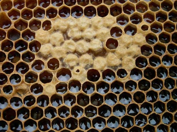 Le miel des abeilles, un produit naturellement bon !