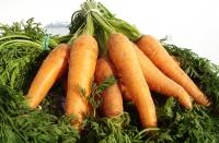 Huile de carotte, pour un teint uni et un bronzage parfait !
